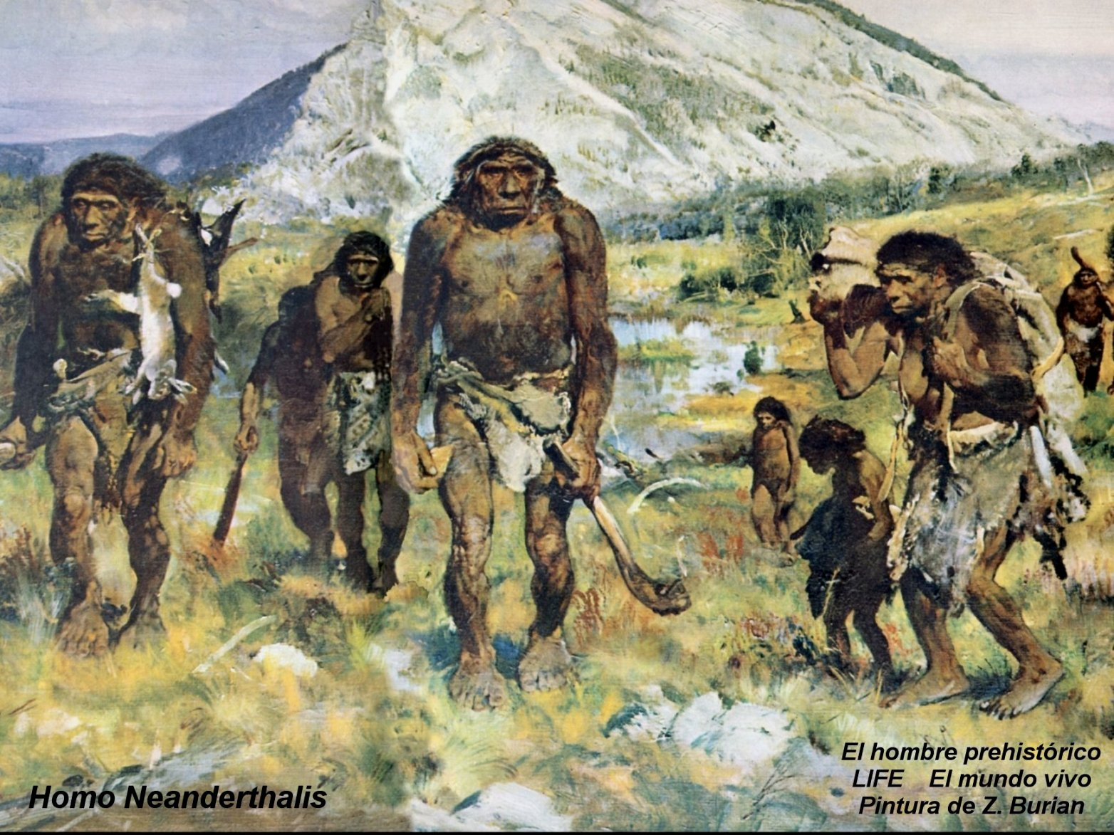 301 Moved Permanently Neanderthal 1