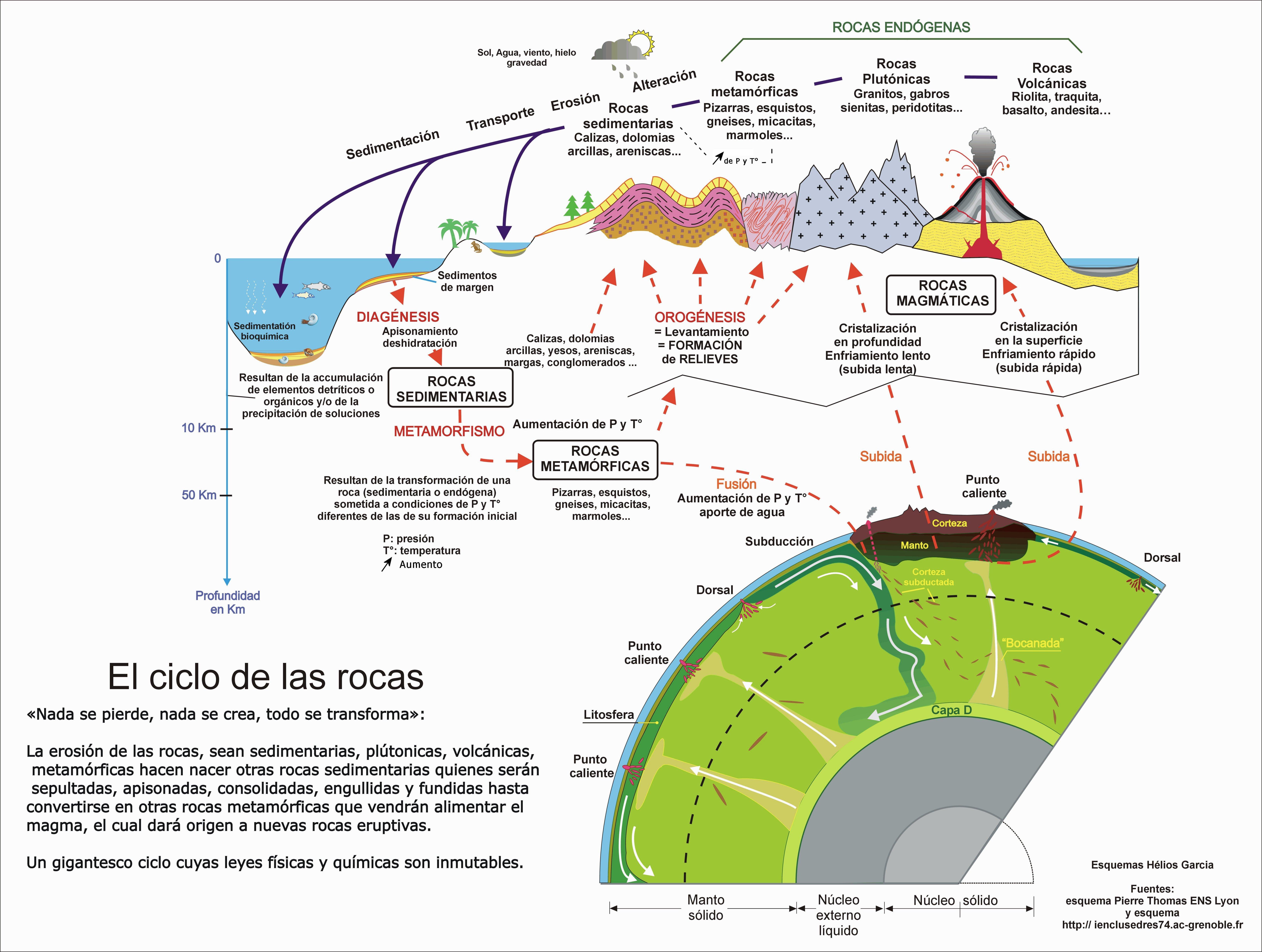 ciclo sedimentario | echino