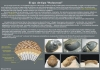 Les Trilobites El ojo Holocroal 1