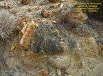 2016-09-13-fuente-alamo-jordana-53-copie